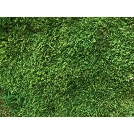 Flat stabilized moss