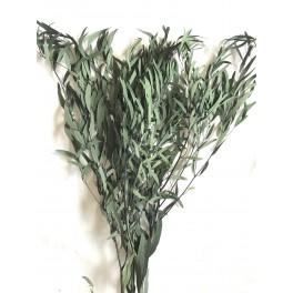 Eucalyptus Nicoly stabilisée