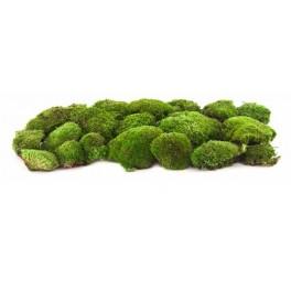 Pole stabilized moss
