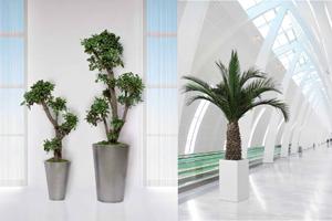 plante stabilis e